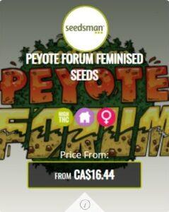 Peyote Forum Feminized Seeds For Sale