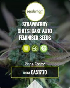 Strawberry Cheese Cake Autoflowering Seeds For Sale
