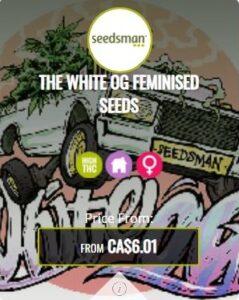 The White OG Feminized Seeds For Sale