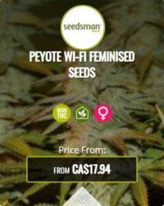 Peyote Wifi Feminized Seeds For Sale